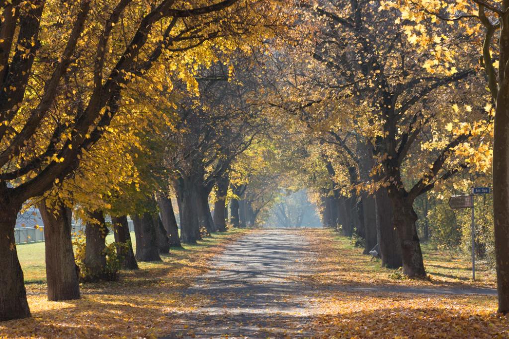 Fall seasonal job climate